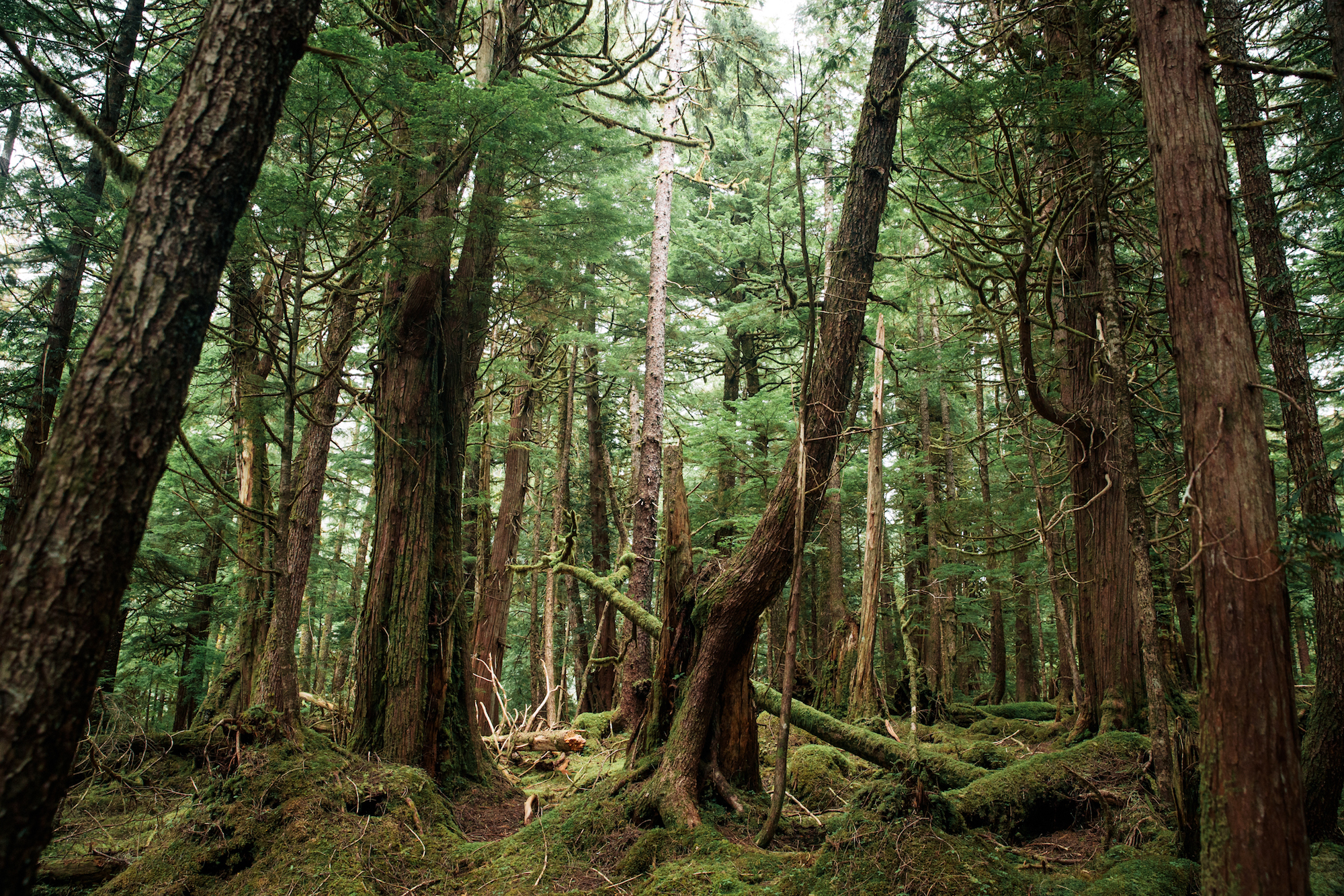 The rainforest in Haida Gwaii, Northern British Columbia