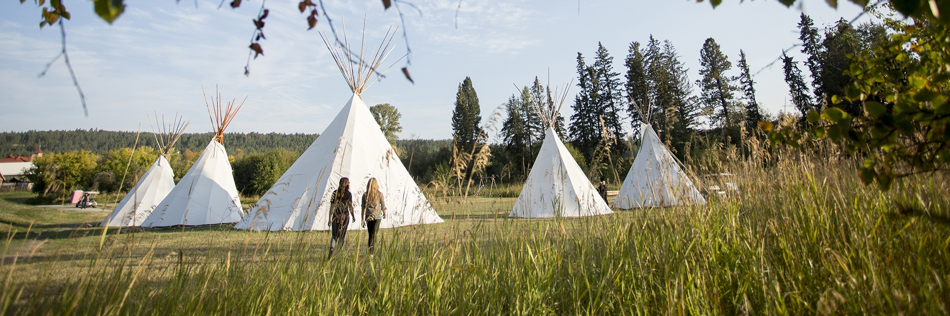 A collection of white teepees in a grassy field
