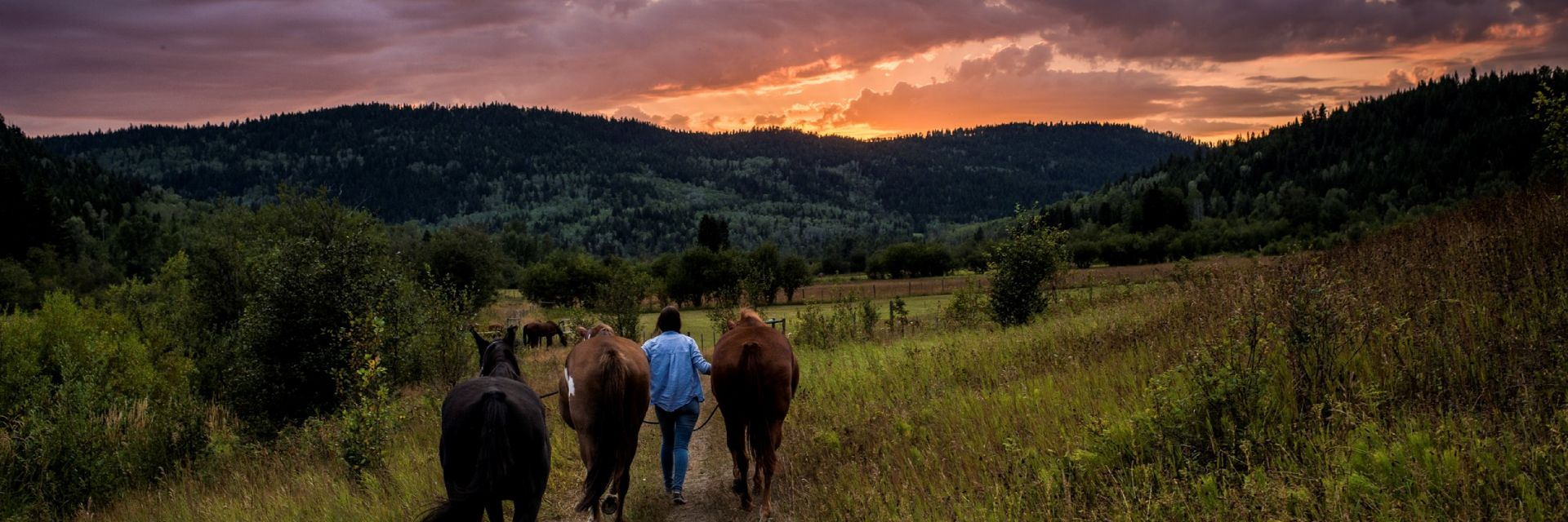 A woman leads horses on a dirt path in a valley at sunset.