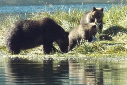 Spirit-Bear-LodgeBear-clan