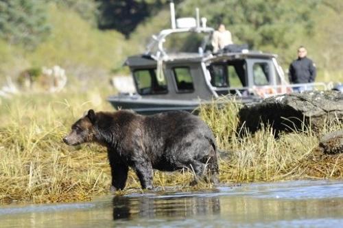 Spirit-Bear-LodgeBear-w-boat
