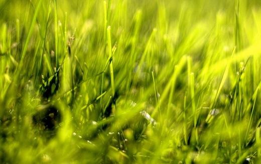 Takaya-Grass-520x326