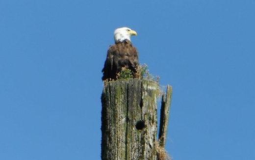 Takaya-tours-eagle