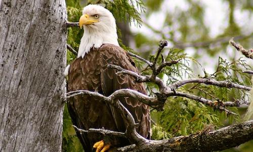 kawatsi-tours-eagle