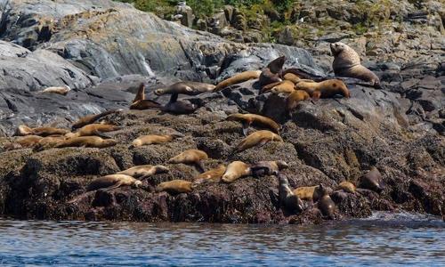 kawatsi-tours-sea-lion-rock