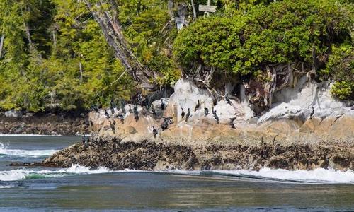 kawatsi-tours-tremble-island-closeup
