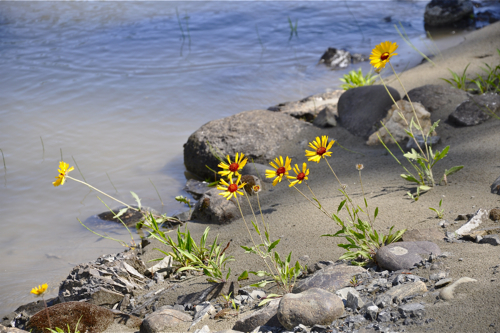 Splitrock-Environmental