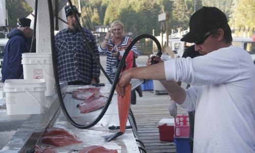 Walters Cove Resort Fish Processing
