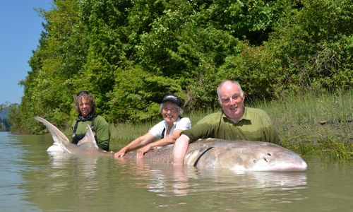 big-sturgeon-great-river-fishing