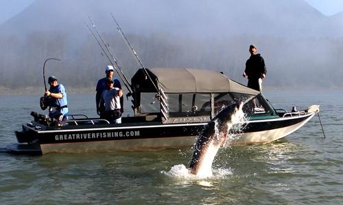 sturgeon-jumping-great-river-fishing-adventures