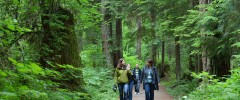 talking-trees-tour-stanley-park-talaysay-tours