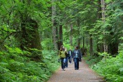 talking-trees-tour-stanley-park-talaysay-tours