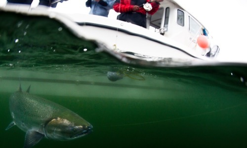 Haida Fishing Charters