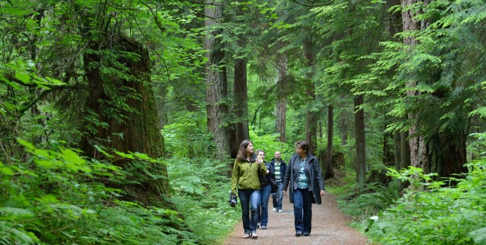 talking-trees-tour-stanley-park-talaysay