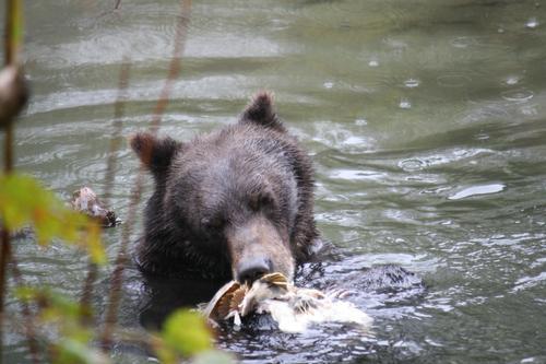 Homalco Wildlife Tours_image